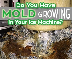 Mold In your ice Machine