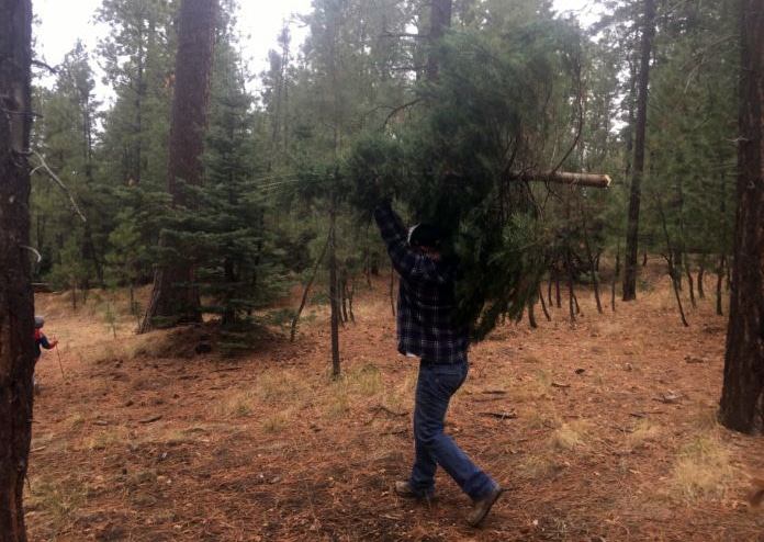 Gilbert Christmas tree farms